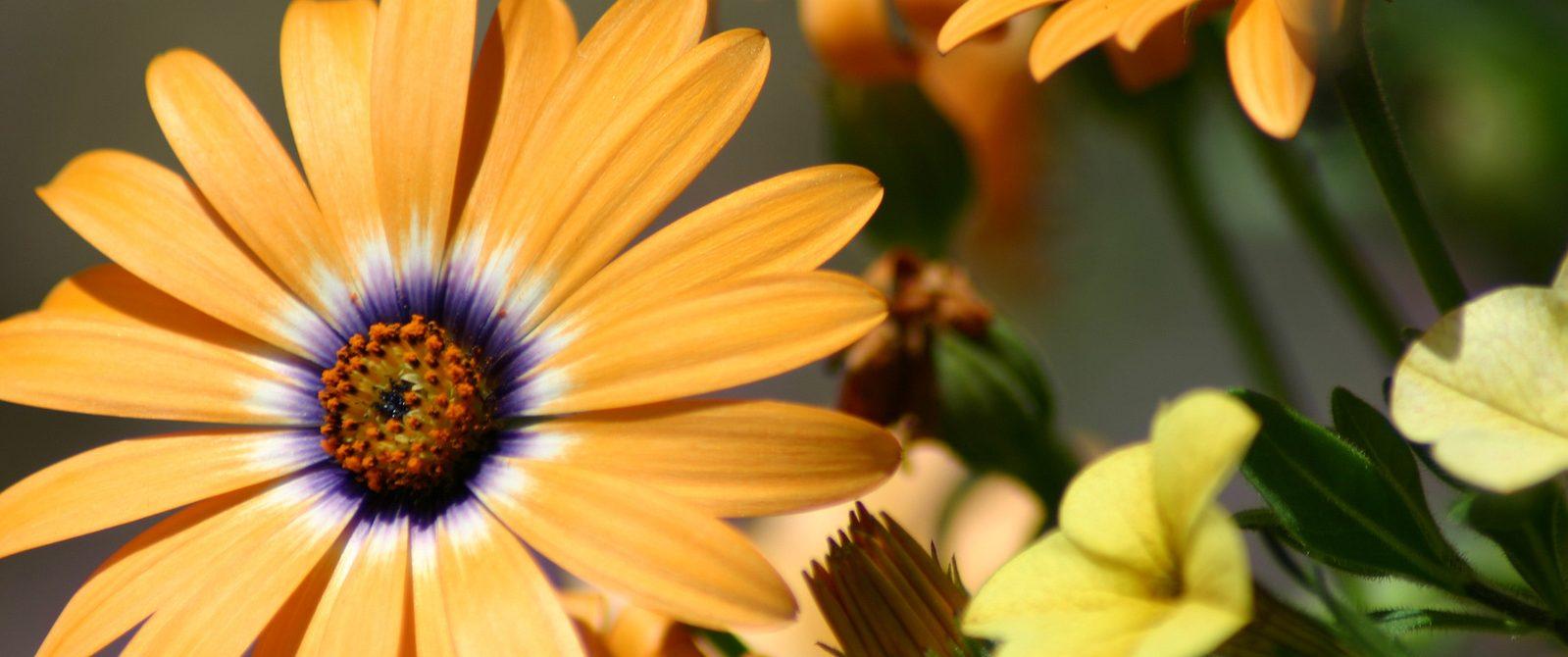 orange-flower-1532700-1599x1066